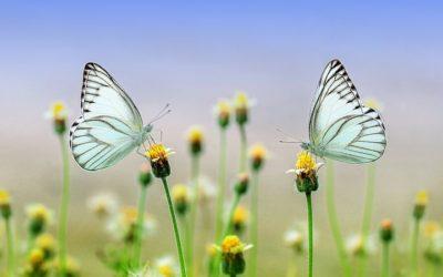 """Objetivo Mindfulness: EN ABRIL """"LAS EMOCIONES"""""""